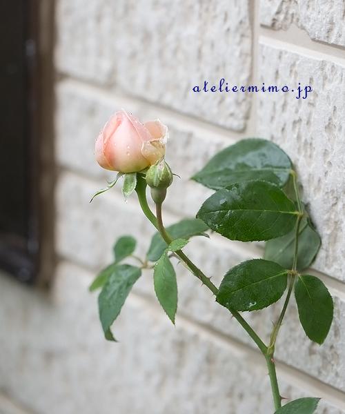 f:id:hikari-mimo:20180425173241j:plain