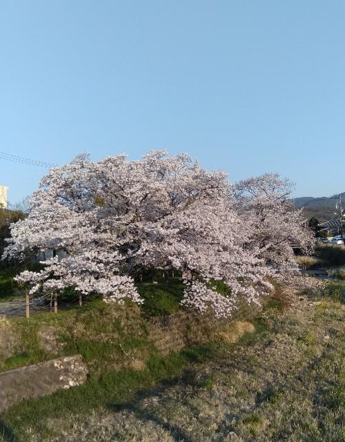 f:id:hikari1001tt:20200405111027j:image
