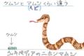 [肉食][毒あり][45センチ以上][卵胎生][肉食][reptiles]○○と××くらい違う  (ニホンマムシ)