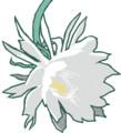 [月下美人][花][イラスト][指で描く]