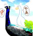 [素材(c)屋上][一部に素材使用][陸の生き物][日本にもいる鳥][現代の生き物][birds][肉食]てst 孔雀と家鴨