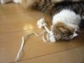 [こた動画][ノーカット版][犬用][猫動画]【小太郎くん】犬用のデンタルおもちゃですが