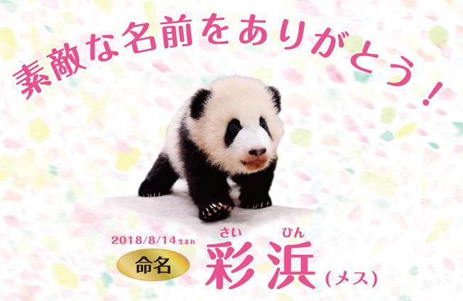f:id:hikarireinagatsuki:20190306211634j:plain