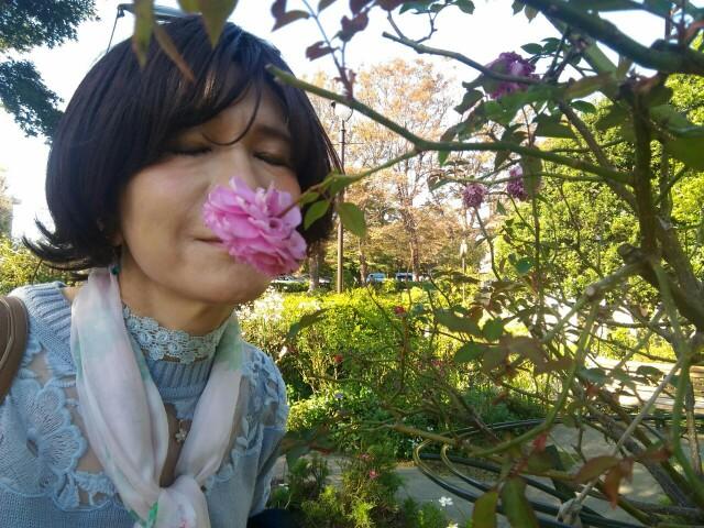 f:id:hikarireinagatsuki:20191122184643j:image