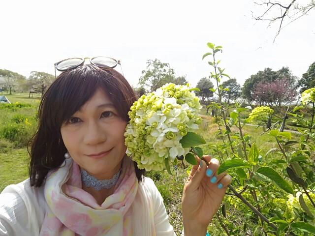 f:id:hikarireinagatsuki:20200414230303j:image