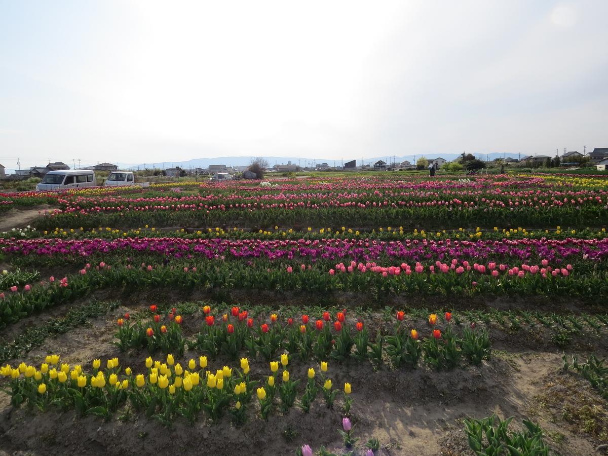 f:id:hikarireinagatsuki:20200421205112j:plain