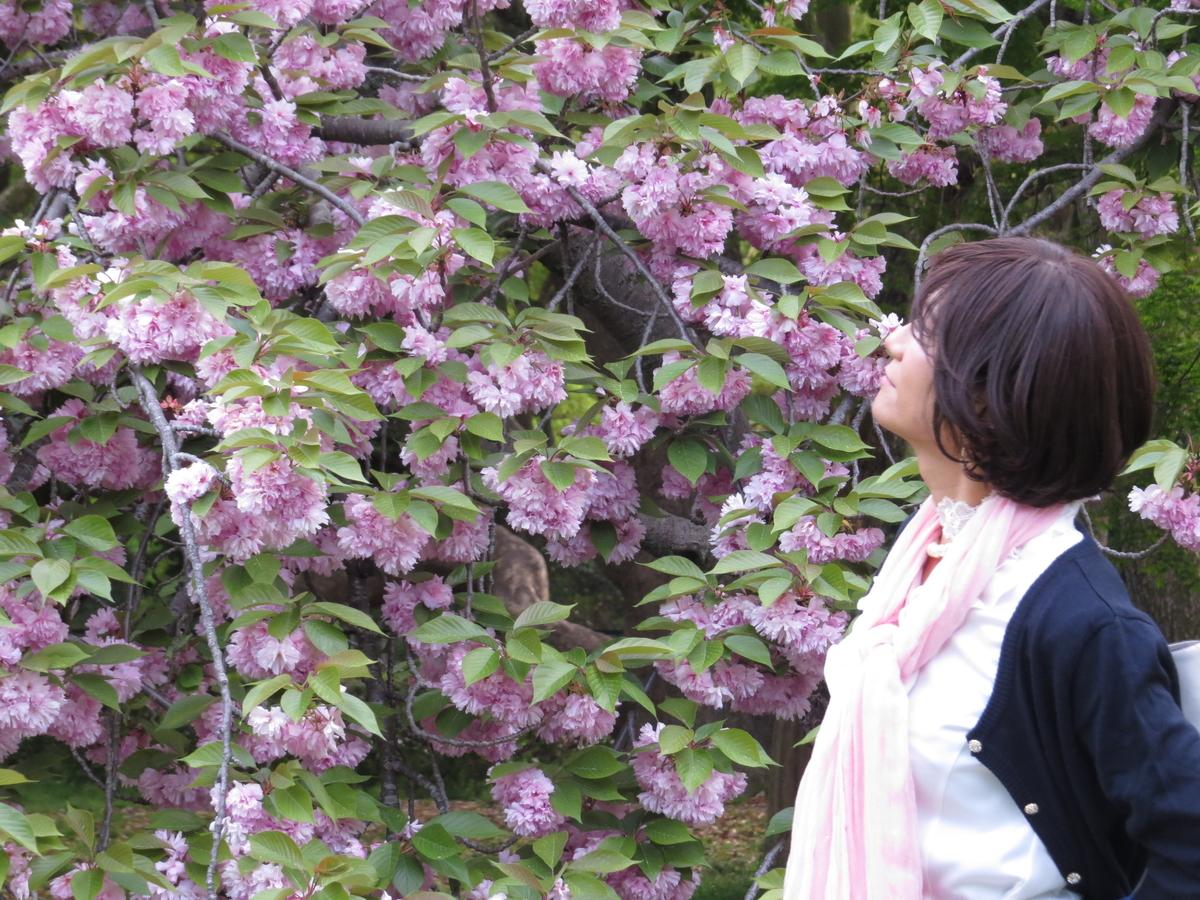 f:id:hikarireinagatsuki:20200430205339j:plain