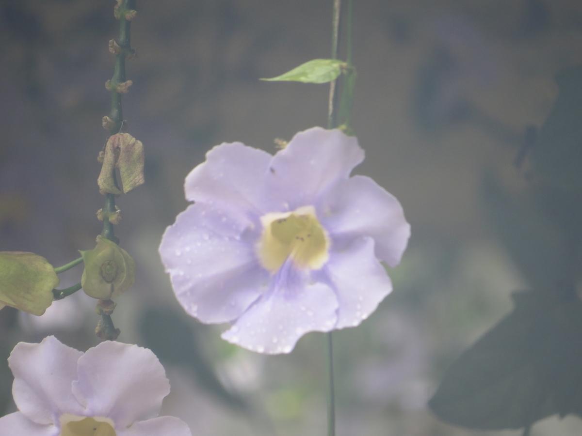 f:id:hikarireinagatsuki:20200602192510j:plain