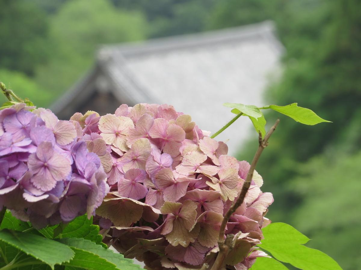 f:id:hikarireinagatsuki:20200713001220j:plain