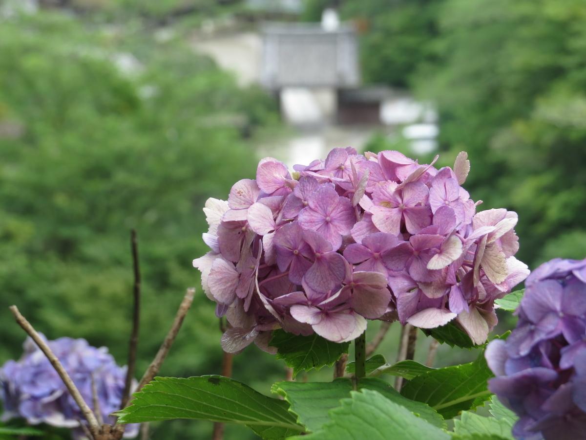 f:id:hikarireinagatsuki:20200713001243j:plain