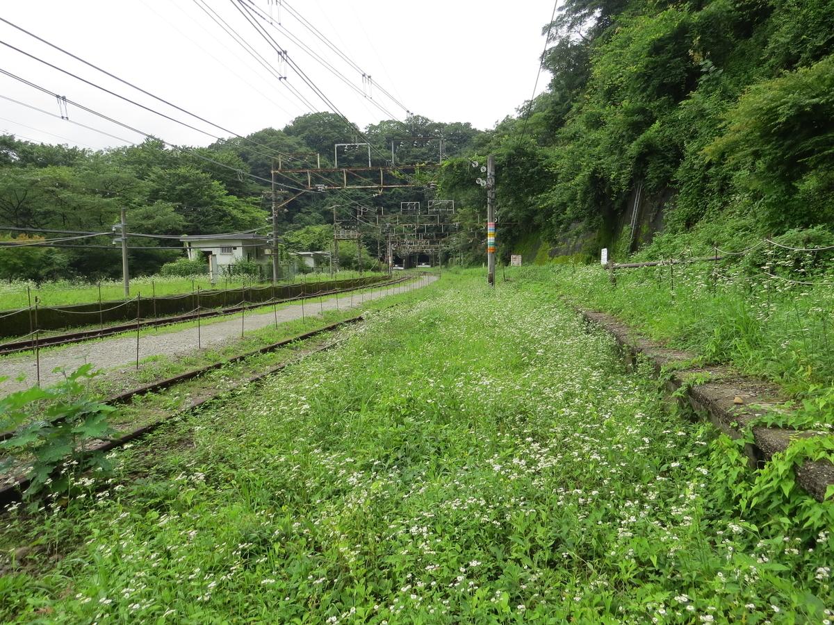 f:id:hikarireinagatsuki:20200730191230j:plain