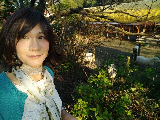 f:id:hikarireinagatsuki:20201027131302j:image