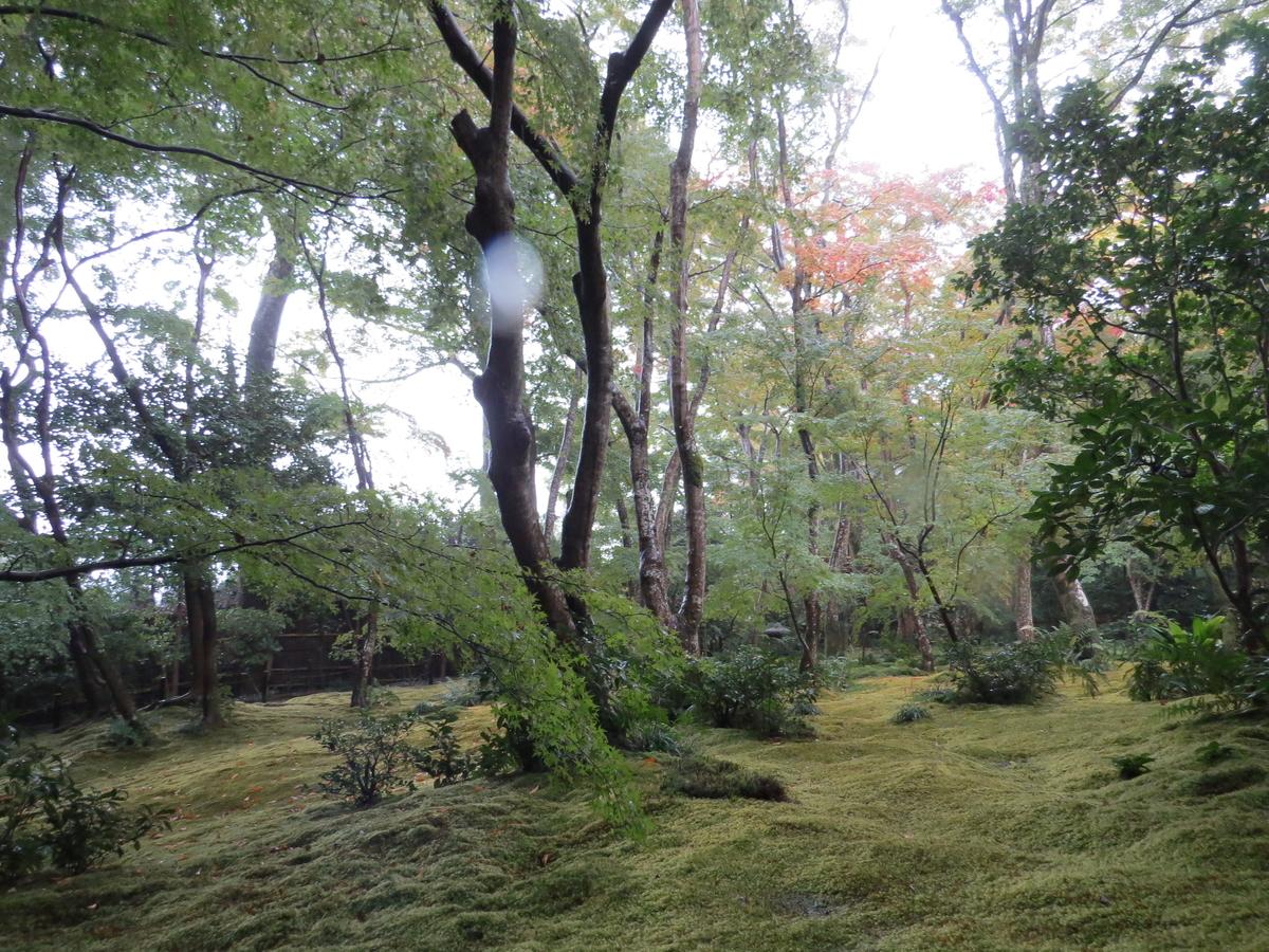 f:id:hikarireinagatsuki:20201108161812j:plain