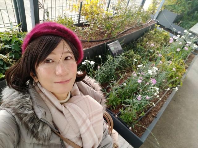 f:id:hikarireinagatsuki:20210101132624j:image