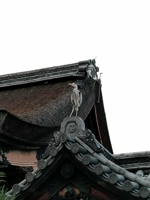 f:id:hikarireinagatsuki:20210101132843j:image