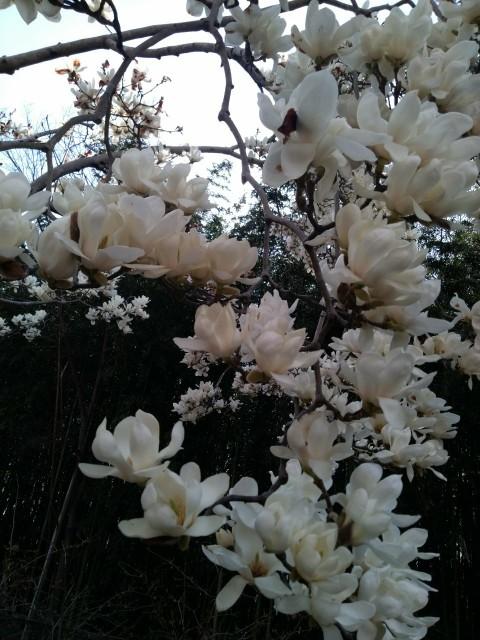 f:id:hikarireinagatsuki:20210322180840j:image