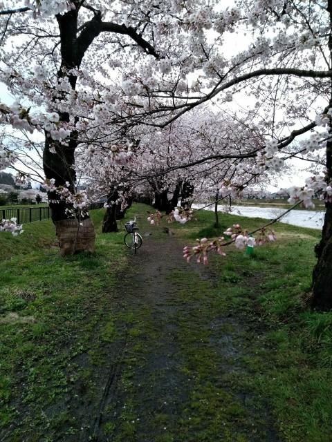 f:id:hikarireinagatsuki:20210419115043j:image