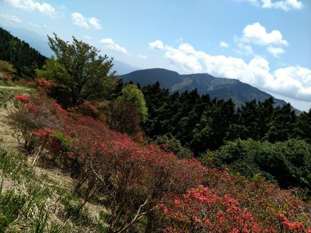 f:id:hikarireinagatsuki:20210508151505j:image