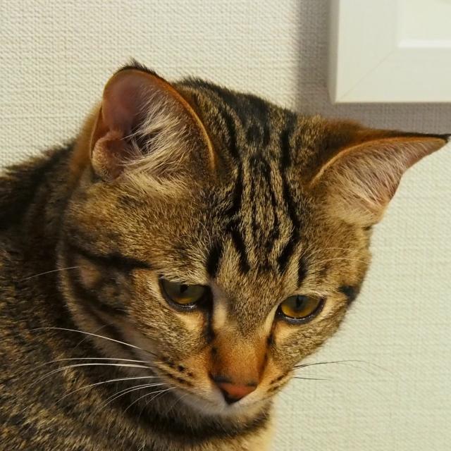 f:id:hikaru-ko:20201211120218j:plain