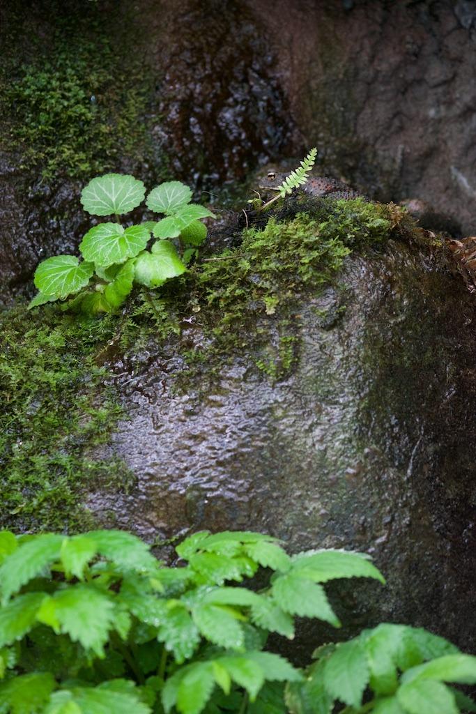 f:id:hikaru-remoteregion:20180413013724j:plain
