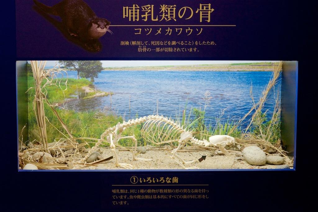 f:id:hikaru-remoteregion:20180530200704p:plain