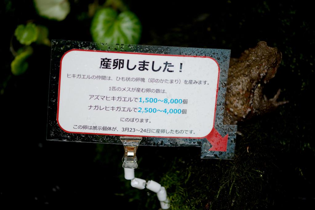 f:id:hikaru-remoteregion:20190328225239j:plain