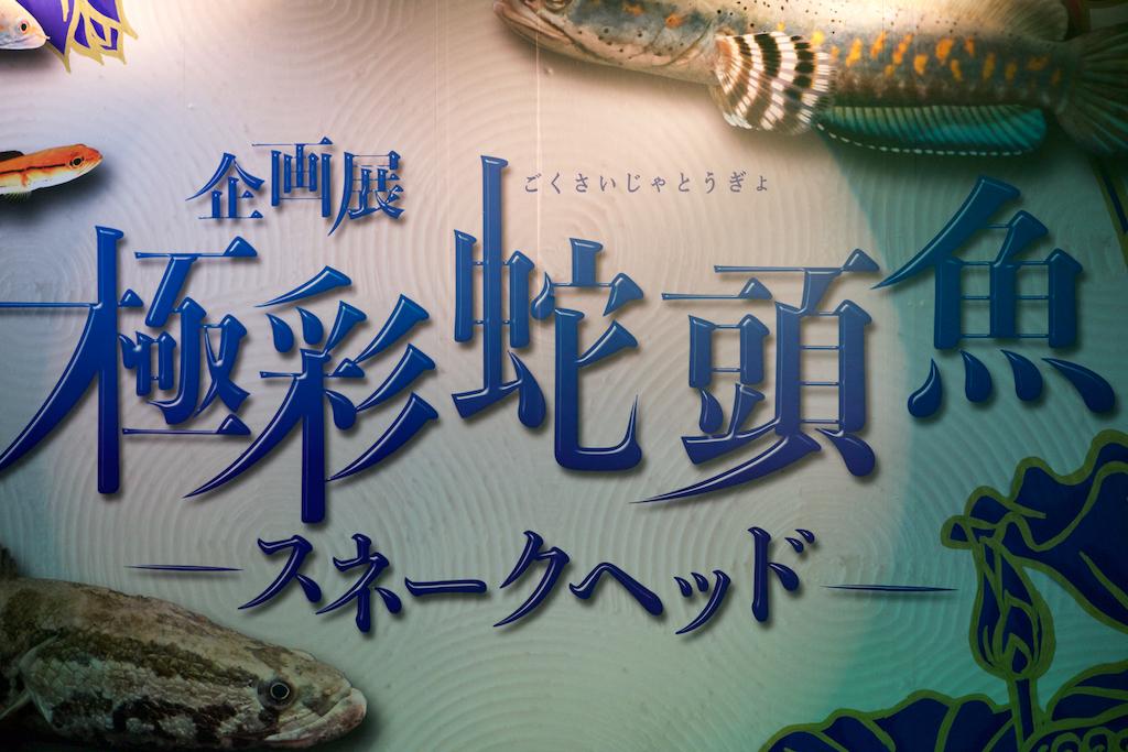 f:id:hikaru-remoteregion:20210520000228j:plain