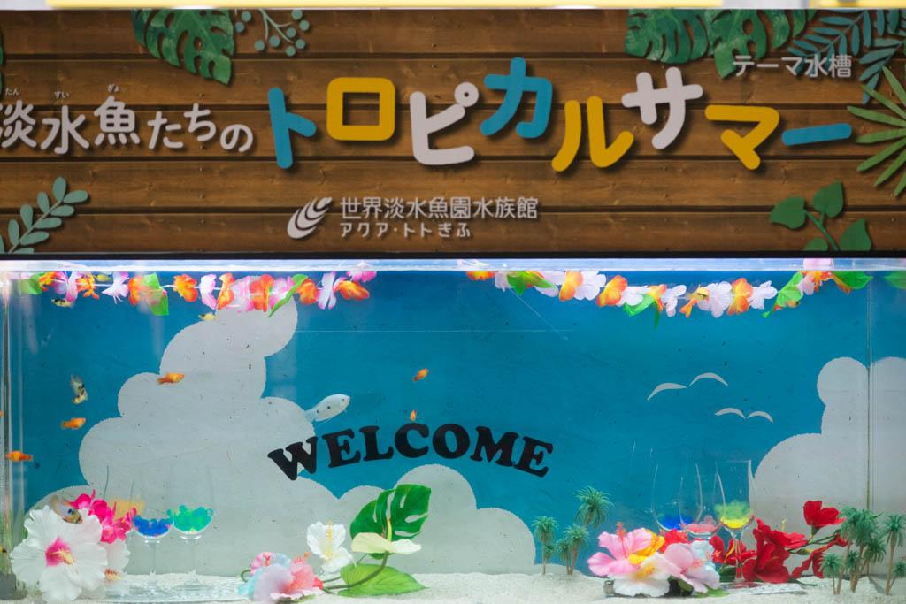 f:id:hikaru-remoteregion:20210714195205j:plain