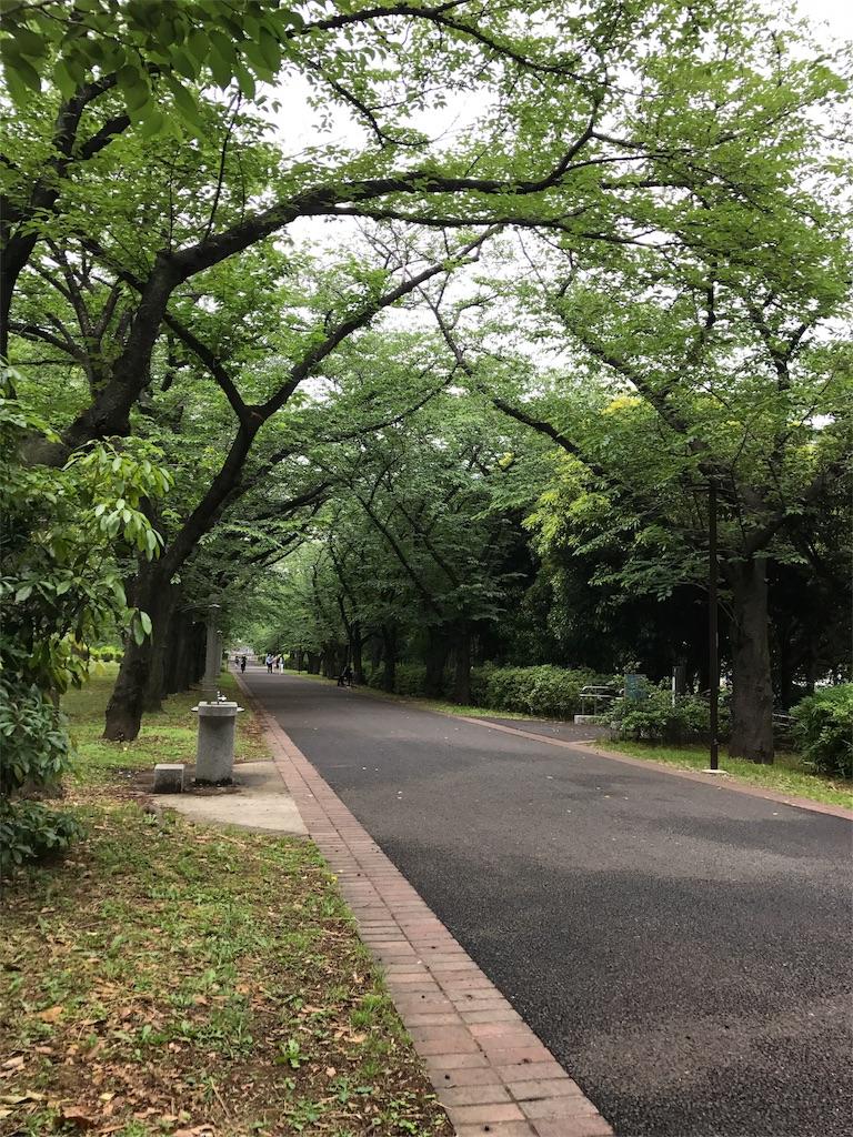 f:id:hikaru233391:20170525223058j:image