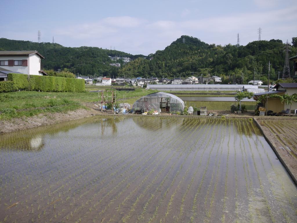 f:id:hikaru_takeuchi:20160610152544j:plain