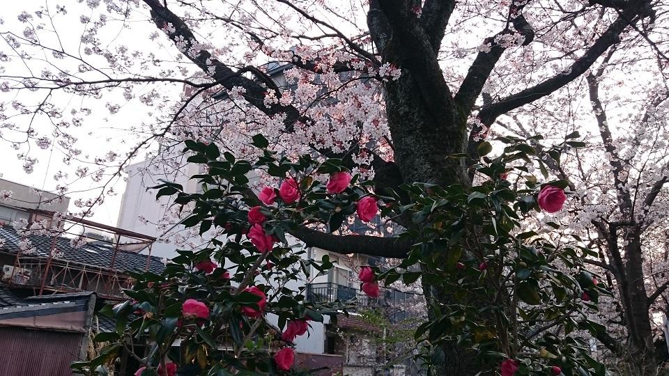 f:id:hikaruhotaru:20180326172752j:plain