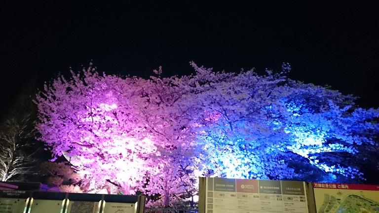 f:id:hikaruhotaru:20180331110433j:plain