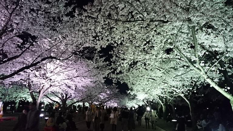 f:id:hikaruhotaru:20180331111946j:plain