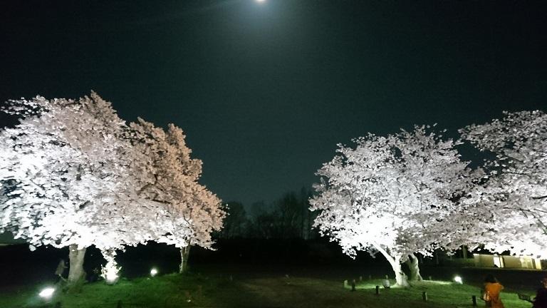 f:id:hikaruhotaru:20180331112055j:plain