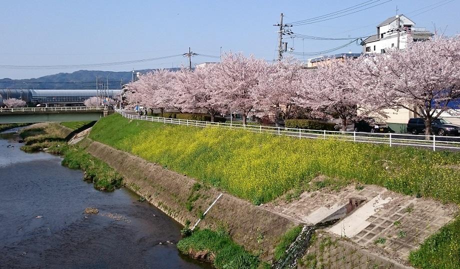 f:id:hikaruhotaru:20180401105741j:plain