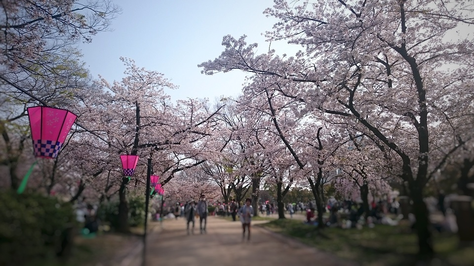 f:id:hikaruhotaru:20180402171235j:plain