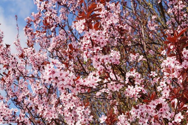 f:id:hikarujinzai:20151022113259j:plain