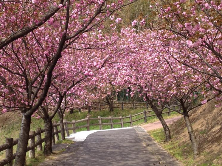 f:id:hikawa029:20120419120553j:image:w450