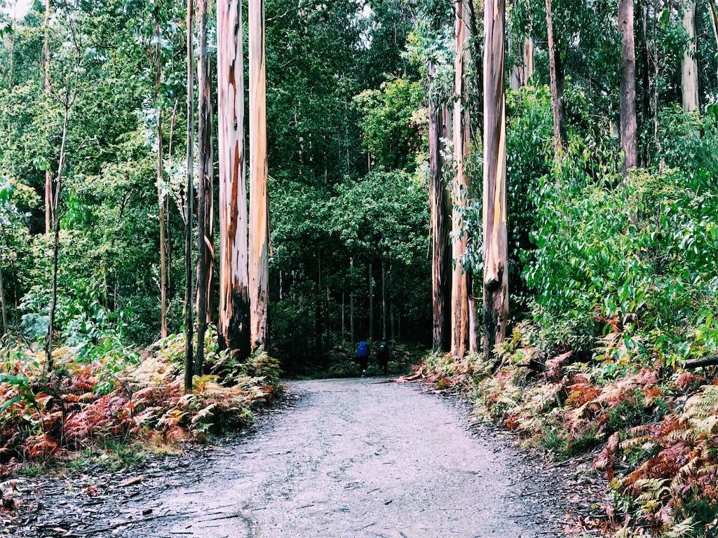 f:id:hike_osuga:20191104093234j:image