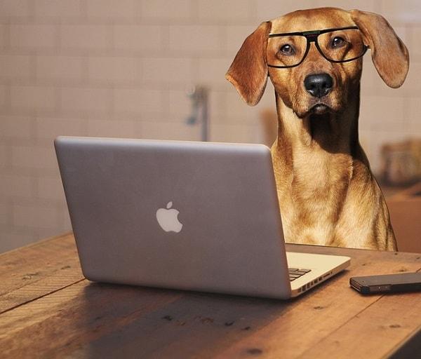 眼鏡をかけた犬がパソコンを操作している