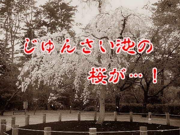 桜(じゅんさい池)