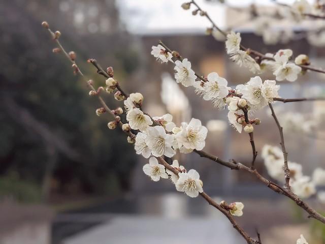 f:id:hikidashi_3:20210228074425j:image