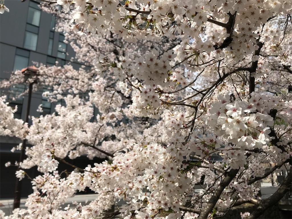 f:id:hikikomori-writer:20190404133041j:image