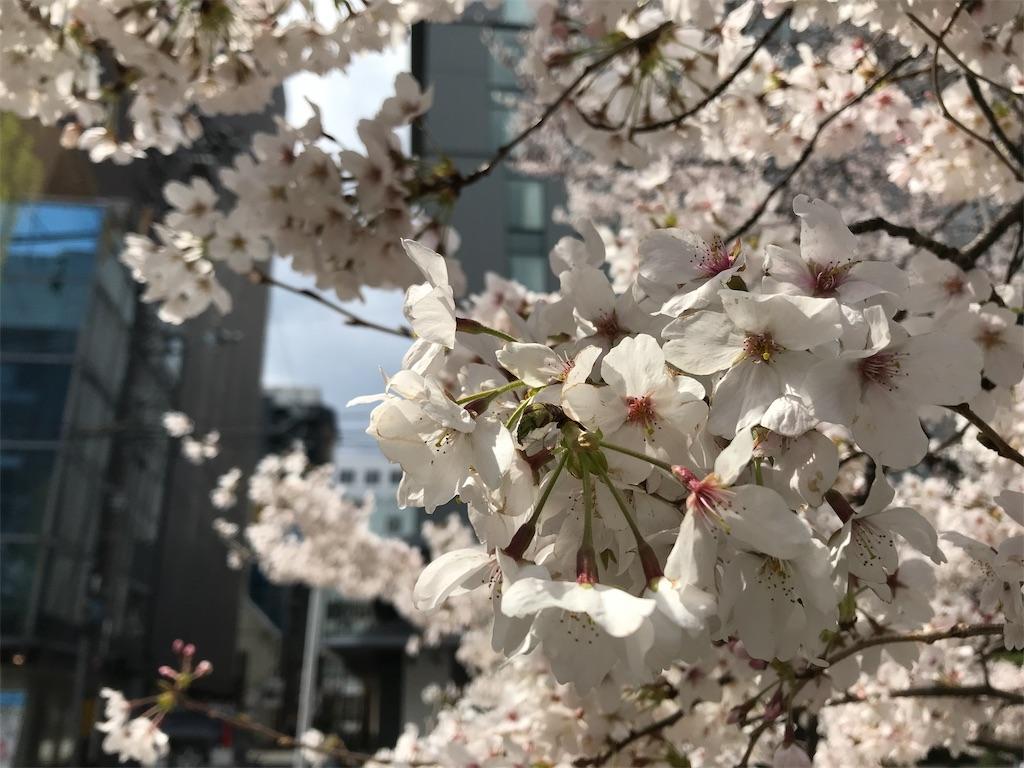 f:id:hikikomori-writer:20190404133215j:image