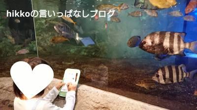 f:id:hikko_no1:20190514122328j:plain
