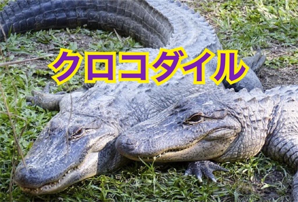 f:id:hikkochan:20190625015141j:image