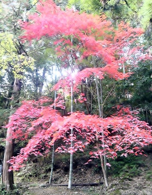 f:id:hiko-asiato:20151121141416j:image:w640