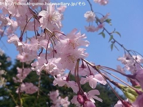 f:id:hikouki-gumo:20170416222552j:plain