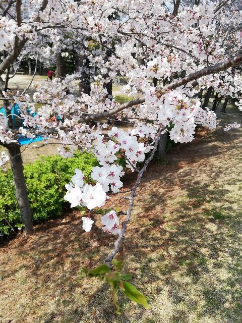 f:id:hikyosyua:20190415074148j:image
