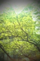 [twitter] 緑がキレイ!横浜のヨドバシにdesire触りにいくお!
